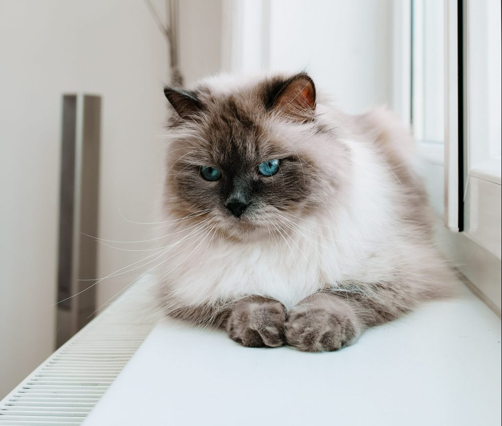 Kinderliebe_Katze_blaue_Augen